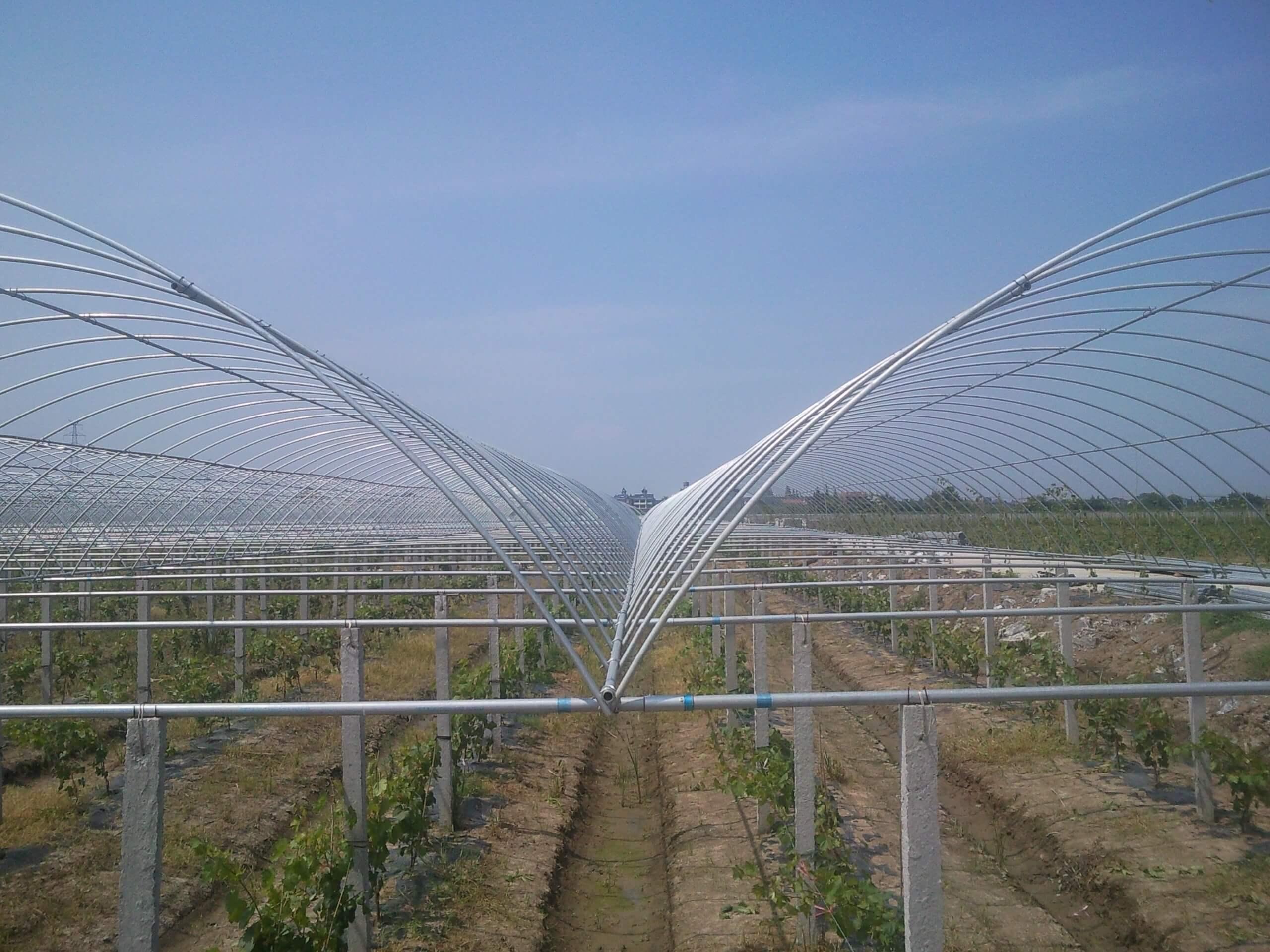 温室葡萄大棚
