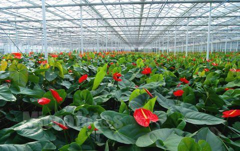 塑料薄膜花卉大棚