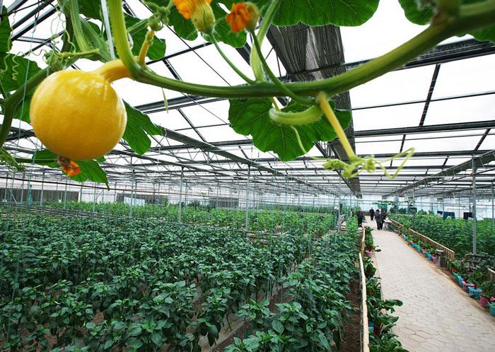 西安蔬菜温室大棚