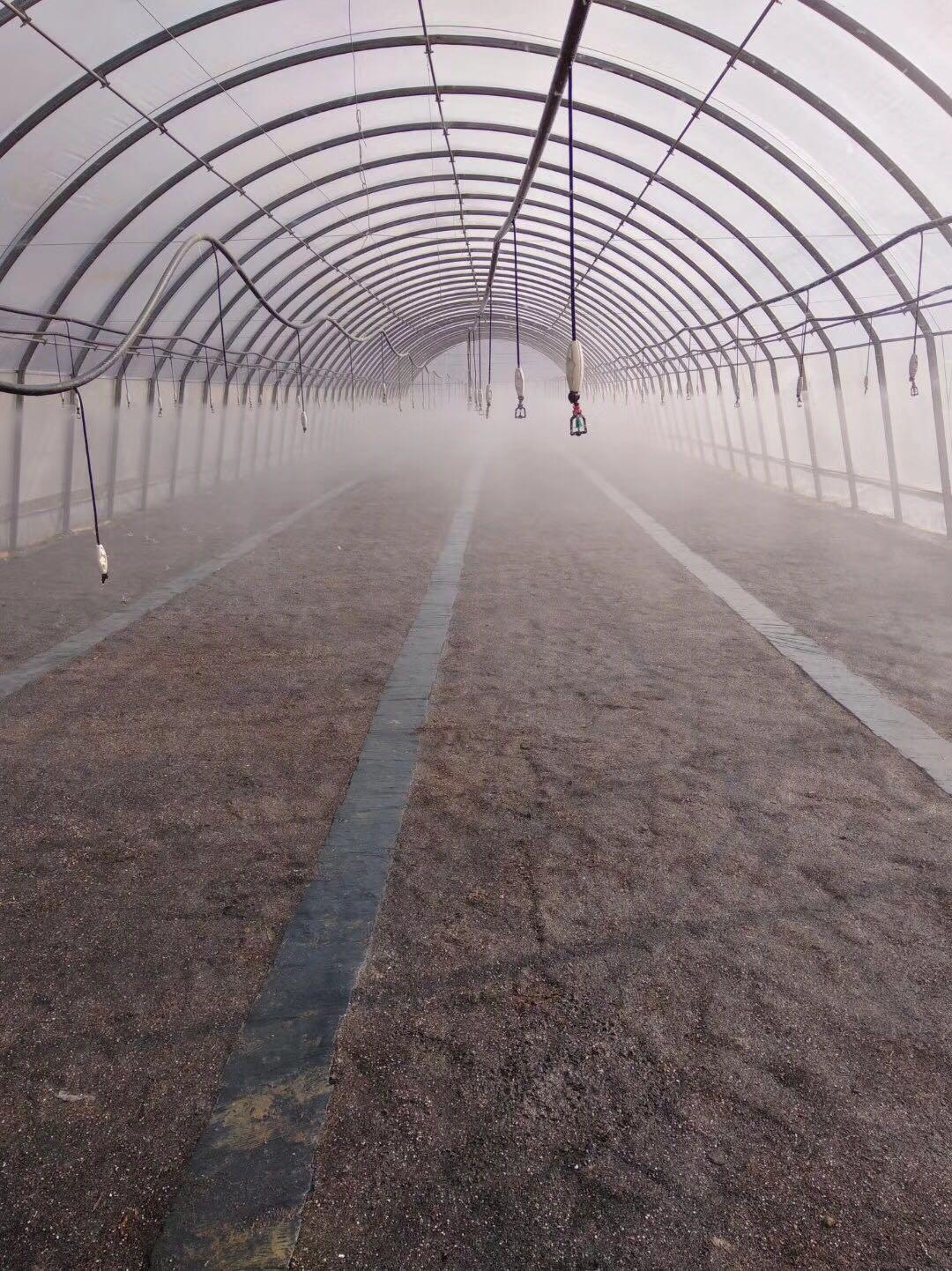 茄子温室大棚