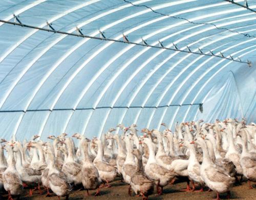 西安养鸭大棚