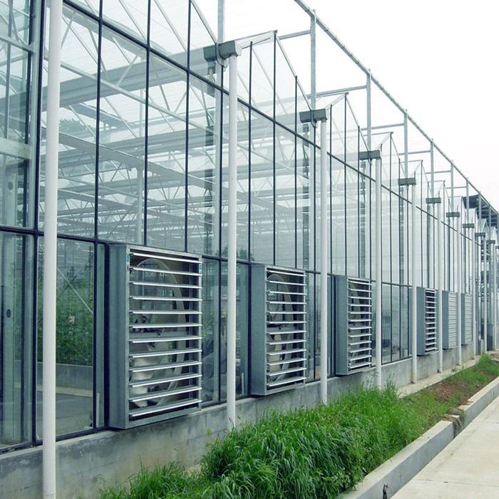 蔬菜玻璃大棚