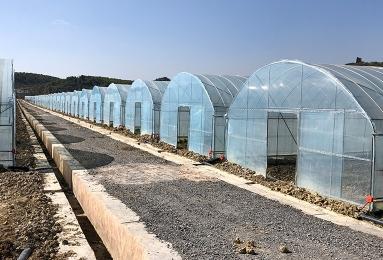 食用菌智能温室大棚