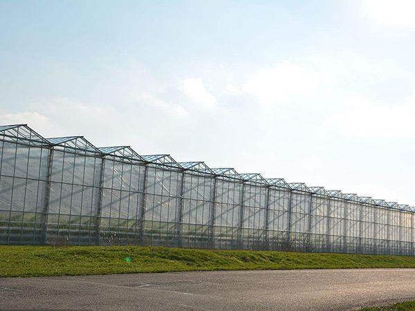 连栋日光温室大棚