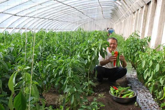 日光温室种植大棚