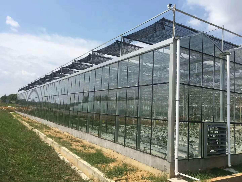 新型养殖温室大棚
