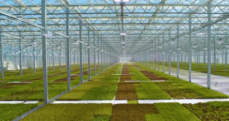 新型温室大棚在现代农业中被广泛应用