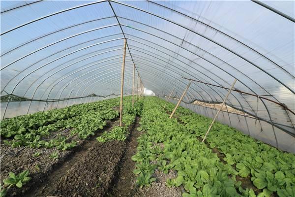 蔬菜溫室大棚建設應考慮的兩個要素