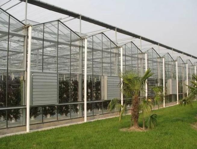 蔬菜温室大棚建设应考虑的两个要素
