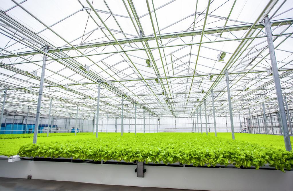 冬春季节温室大棚应加强预防病害发作