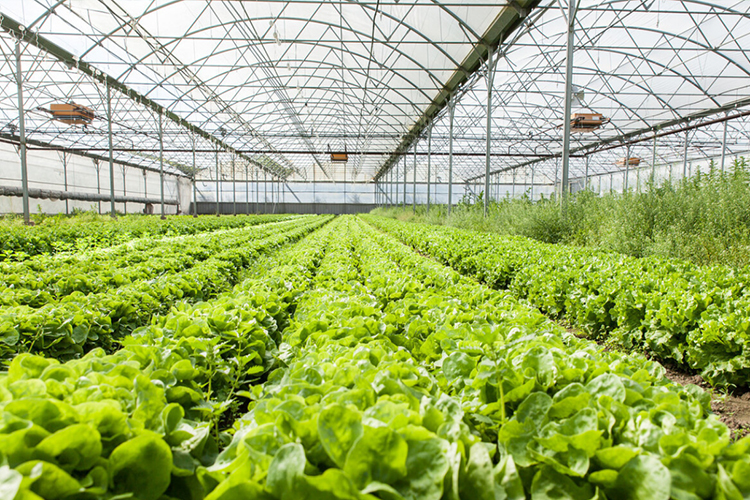 蔬菜温室大棚建造都需要哪些的材料?