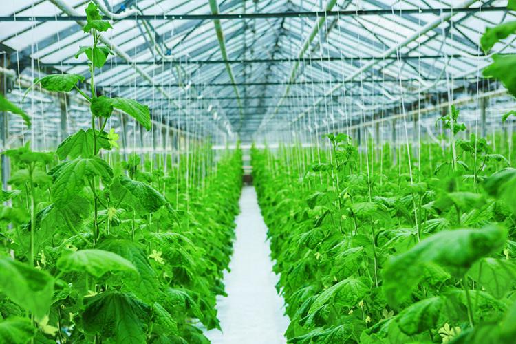 如何购买质优价廉的温室棚膜呢?