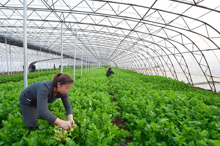 冬季蔬菜温室大棚种植防寒技巧