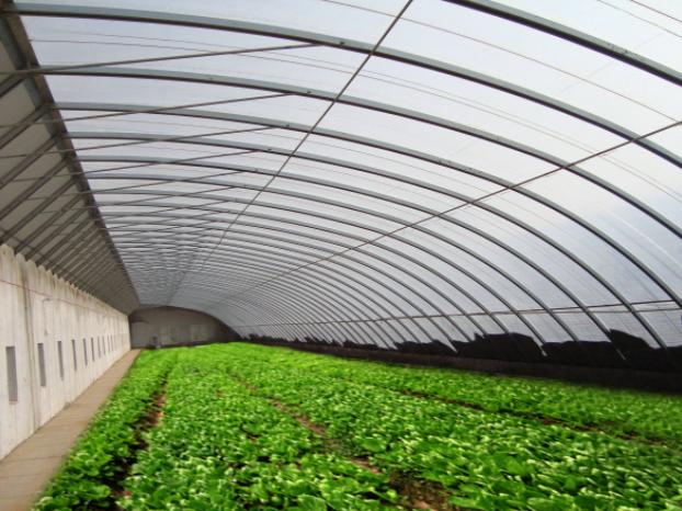 蔬菜温室大棚