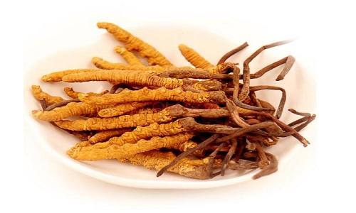 混合食用冬虫夏草的方法有哪些?