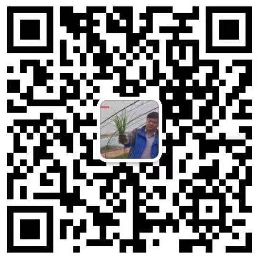 北京绿化公司微信