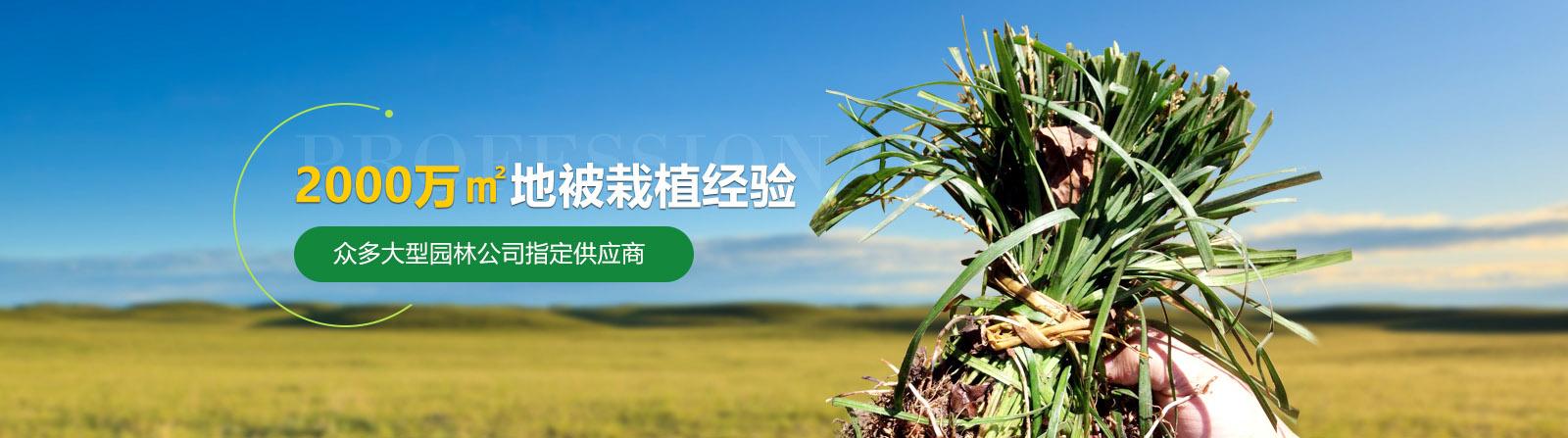 2000万平米栽植经验