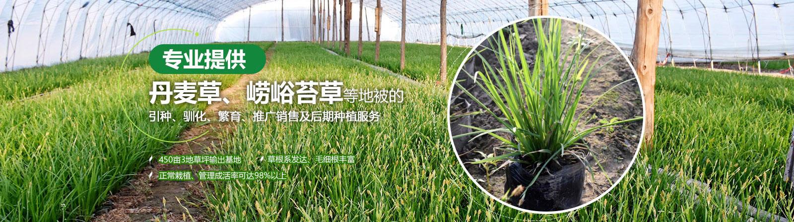 提供崂峪苔草,青绿苔草等地被服务