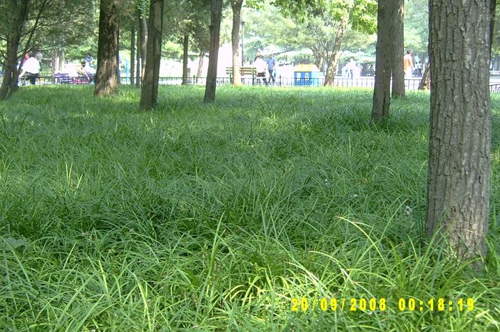 北方常绿草坪