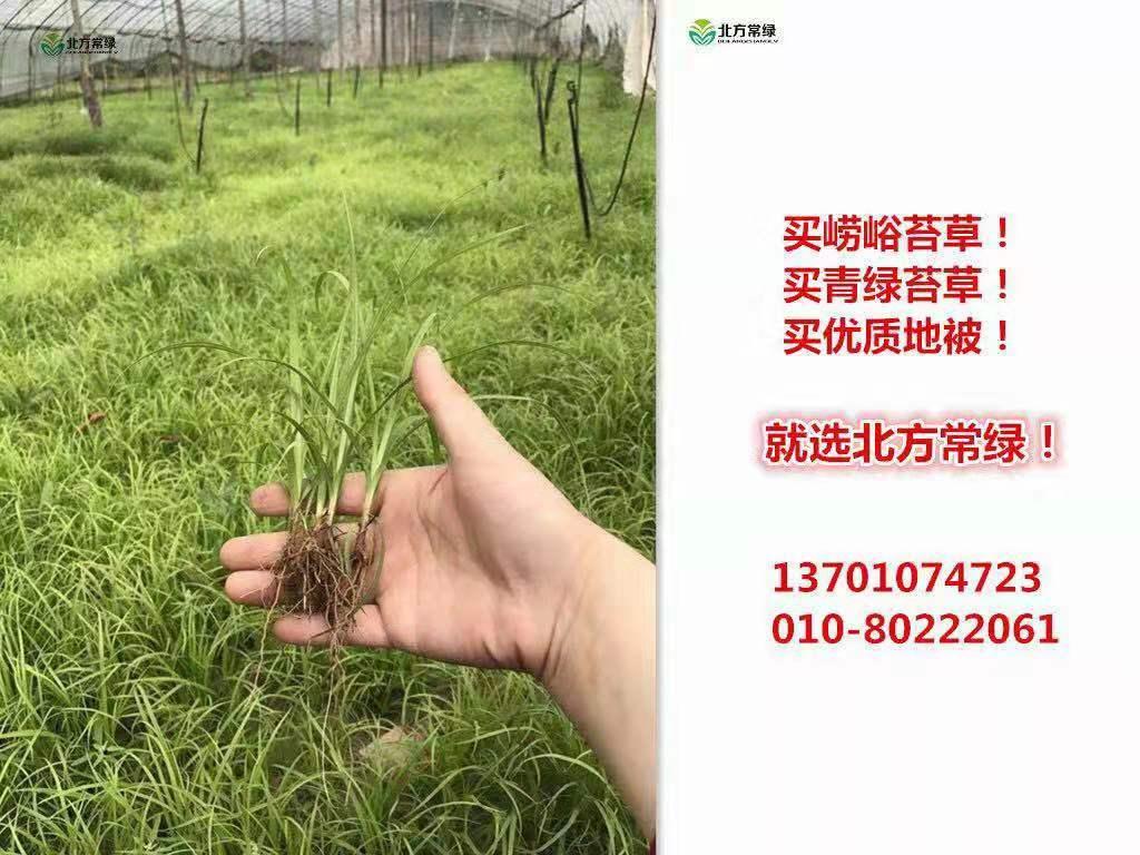 崂峪苔草种子价格是多少?