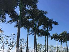 仿真大王椰树