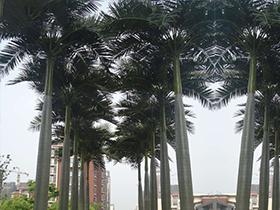 仿真大王椰子树