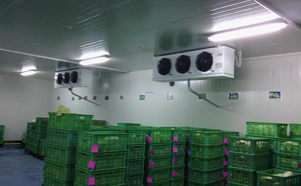 毕节冷库建造一个800平方米钢结构的食品冰鲜冷冻库的造价