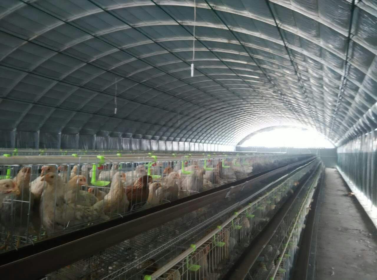 兰州养殖场大棚建设案例