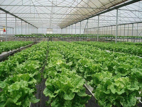 甘肃蔬菜温室大棚