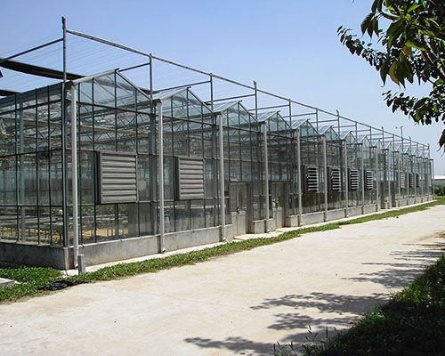 兰州新型农业温室大棚