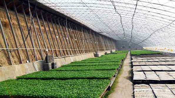 日光农业温室大棚