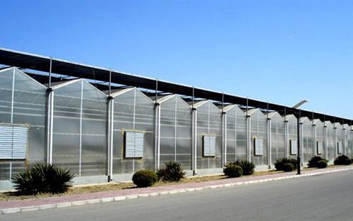 阳光板温室大棚