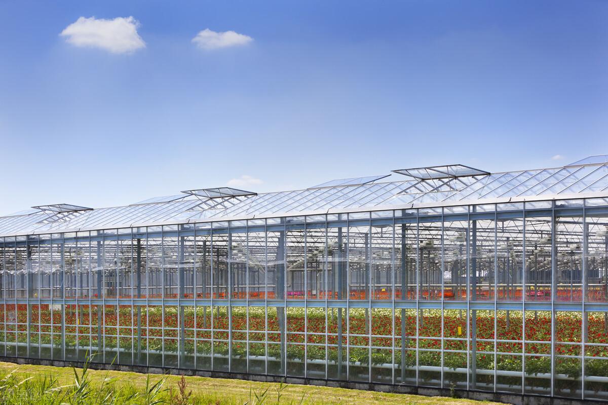 甘肃花卉果业合作社智能温室大棚建设案例