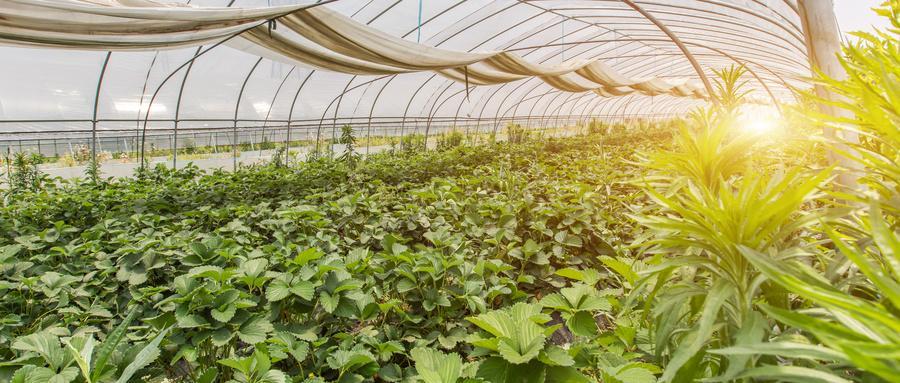 厂家介绍甘肃智能玻璃温室大棚的优势!