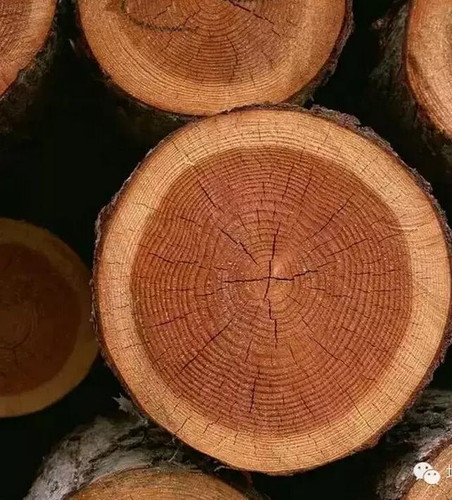 贵阳原木加工