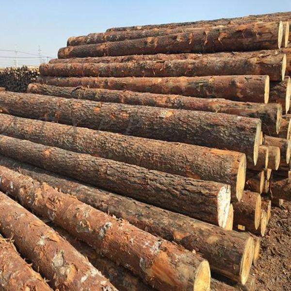贵州圆木价格