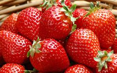 [草莓苗]草莓苗的定植宝典!