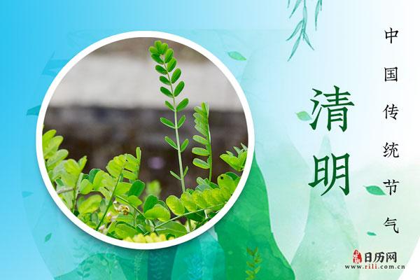 重庆司法拍卖网2021年清明节放假通知