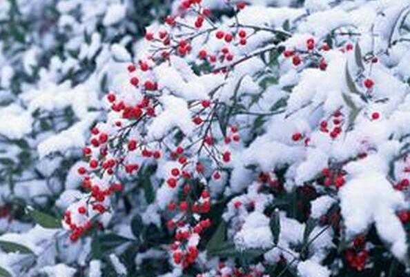 成都花卉租摆针对冬季植物防寒的一些措施与方法