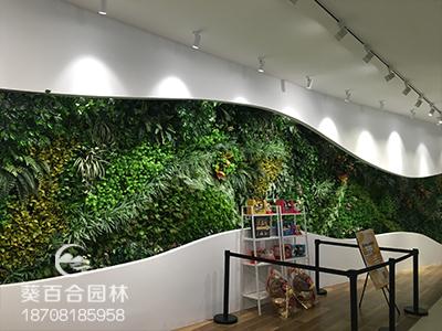 成都腾讯室内植物墙