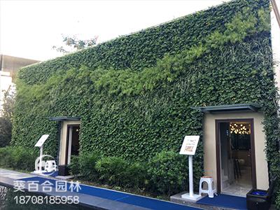天悦地产售楼部室外墙面绿化