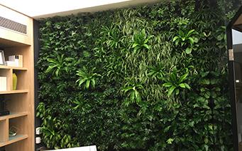 成都酒肆室内植物墙