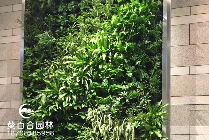 IFS负一楼植物墙