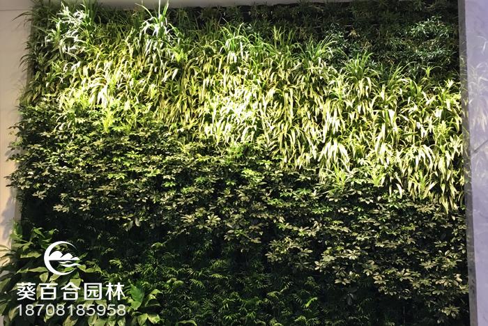 绿色植物墙制作