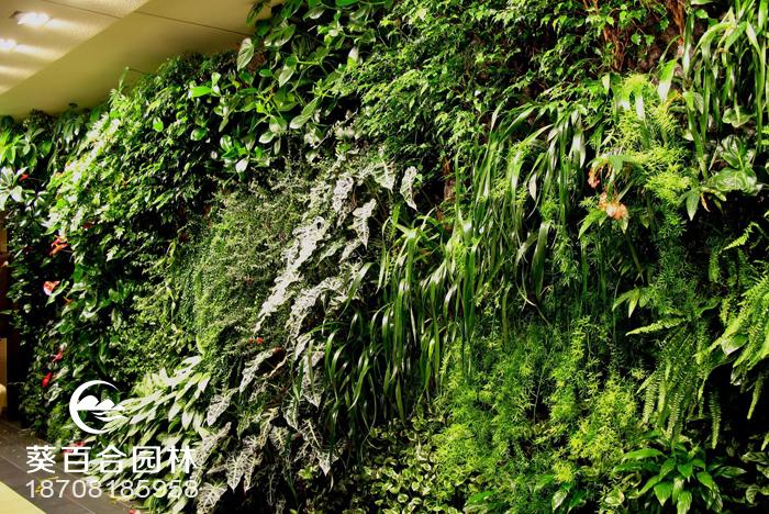 室内植物墙的制作过程介绍