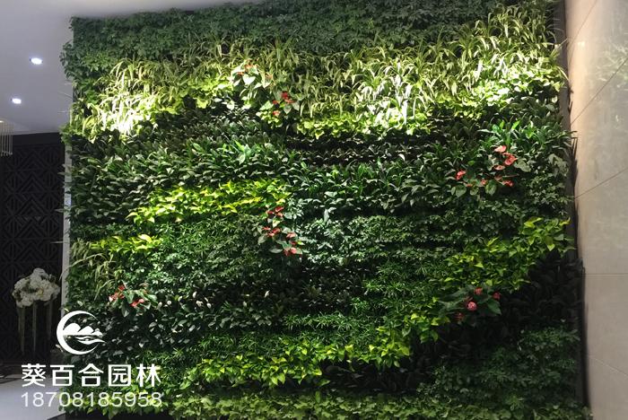 生态植物墙