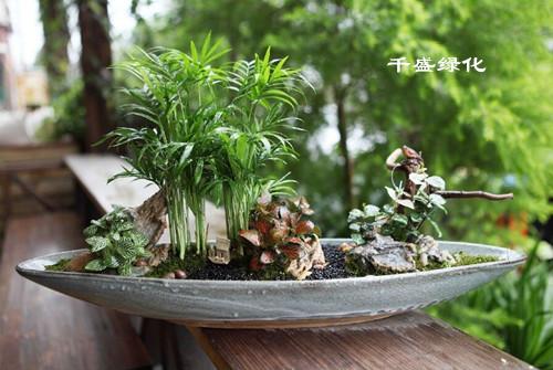 成都室内绿化养护|成都花木租赁|成都室内绿化施工