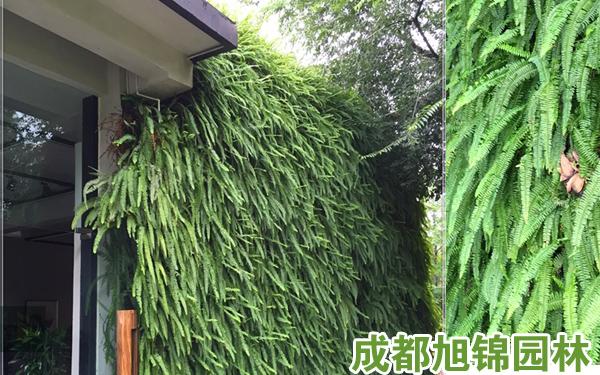 家居植物墙养护过程中的那些事儿,总结四点与大家分享。