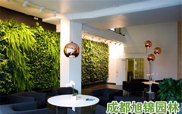 室内植物墙,成都室内植物墙,成都室内植物墙设计,室内植物墙设计,室内植物墙价格,成都室内植物墙价格