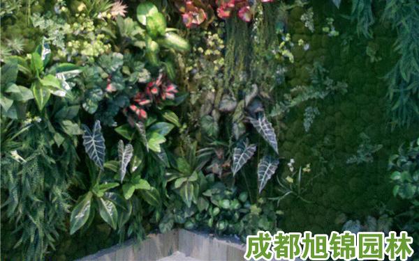 垂直植物墙,成都垂直植物墙,重庆垂直植物墙,垂直植物墙多少钱一平米,室内垂直植物墙,室外垂直植物墙